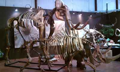 Woolly Mammoth Skeleton in Tucson