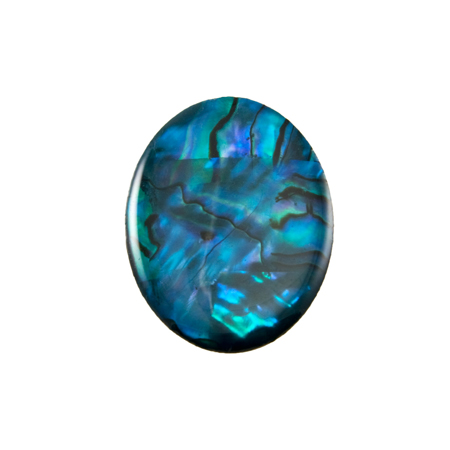 of the abalone family but has deeper colors of blue green and purple