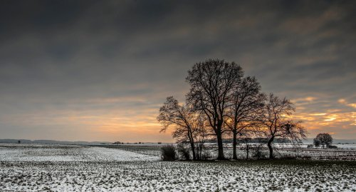 Color Inspiration - Winter Fields