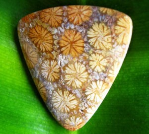 Judy Ellis's Gem Profile- Petoskey Stones and Indonesian Fossil Coral - , General Education, , Fossil Coral Cabochon