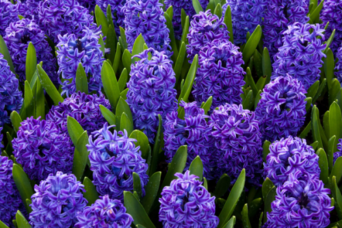 Kristal Wick's Color Inspiration - Happy Hyacinth - , Wire Jewelry Design, Design, color inspiration happy hyacinth