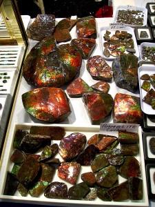 ammolite specimens