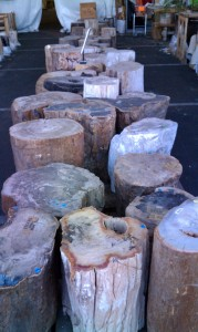 petrified wood in Tucson