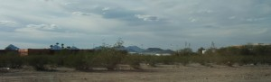 The Tucson skyline from a distance is filled with palm trees and the white tents of the gem shows.