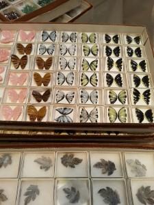Carved gem butterflies