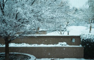 Snow on the trees in Tucson