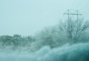 Snow on cacti as we drove to the show that morning