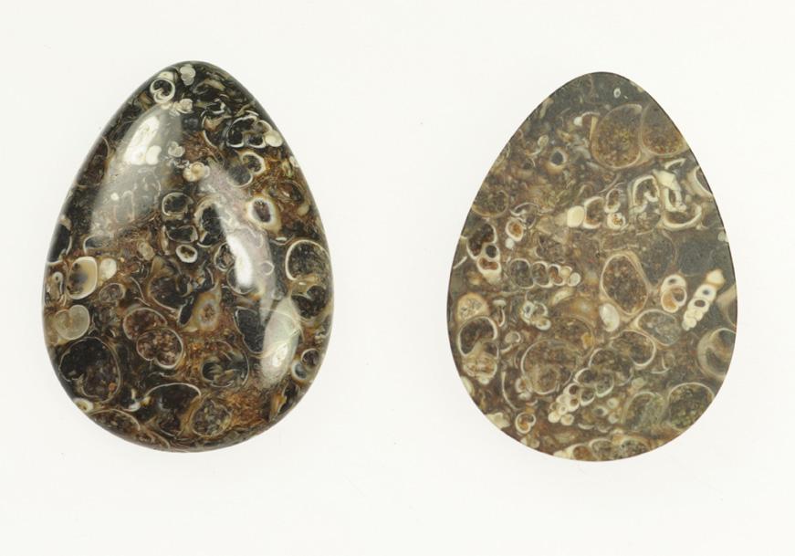 Turritella Fossil Cabochon