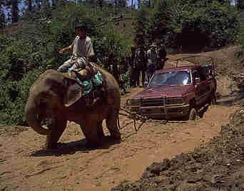 Elephant pulling cars