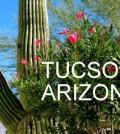 tucsoncactus